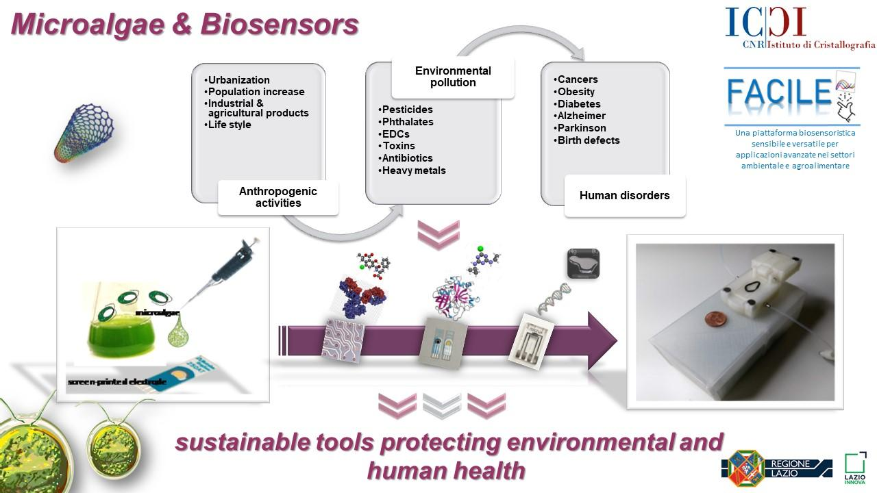 Microalgae and biosensors: sustainable tools protecting environmental and human health.