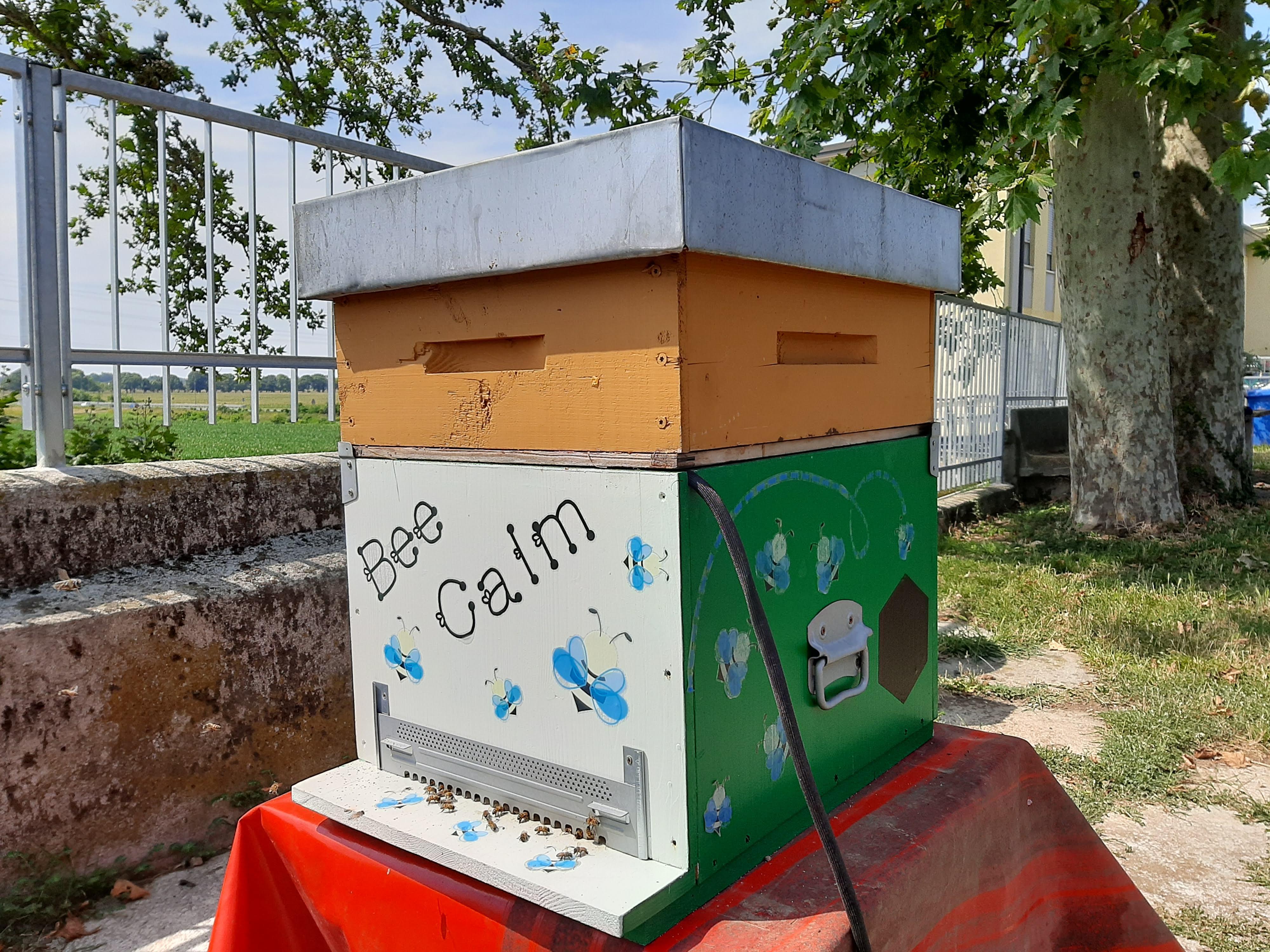 Tecnologie digitali a supporto dell'apicoltura: l'arnia sensorizzata